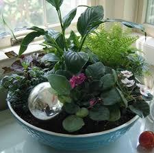 Indoor Plant Arrangements Roots Gardens And Flowers Gallery