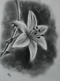pencil drawing of flower realistic drawing of a flower 1000 images