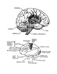 human anatomy and physiology coloring workbook human anatomy
