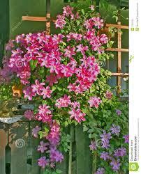 photos de pergola de pergola van bloemen stock afbeeldingen afbeelding 7472754