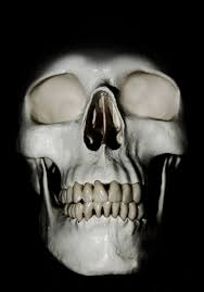 skull halloween background halloween skulls free stock photo public domain pictures