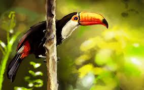 wallpaper u0027s collection toucan wallpapers
