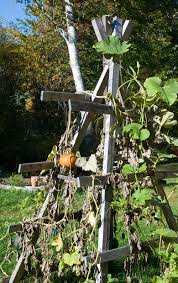 Growing Pumpkins On A Trellis Savory Pumpkin Soup U2013 With A Latin Accent Journeys Over A Stove