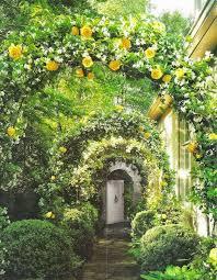 Trellis Arches Garden 182 Best Arbor Trellis Pergolas Arches Gazebos Images On