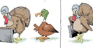 big bird thanksgiving cartoon cartoon thanksgiving funnies