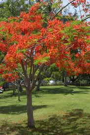 flowering trees with bright orange blossoms in florida hunker