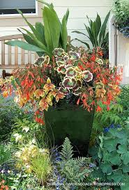 garden pots australia photo album 98 best container combinations warm colors images on pinterest