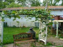 vines for pergolas outdoor goods