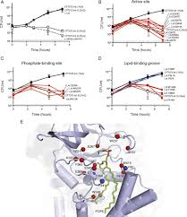 cat orie si e auto b structural insights into lipoprotein n acylation by escherichia