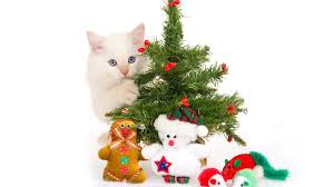 5 cat friendly christmas tree options purrfect love the cat