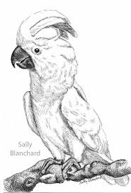 212 best sally blanchard u0027s original parrot art images on pinterest