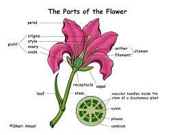 Life Of A Flower - 37 best cc c1w11 byz emp flower parts cubes l5d images on