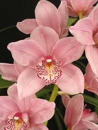 pictures of orchids everglades orchids 561 996 3207