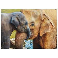 posters wall art ikea edelvik poster elephant with baby width 27