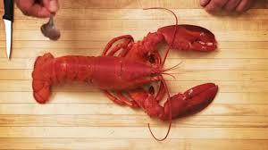 comment cuisiner un omar comment décortiquer le homard