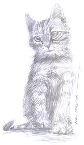 imagenes a lapiz de gatos gato a lápiz dibujo a lápiz draw drawing sketch pencil