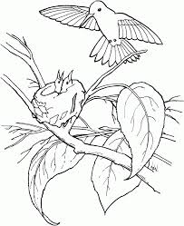 hummingbird coloring pages print birds color