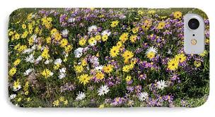 South African Wild Flowers - south african wildflowers photograph by bob gibbons