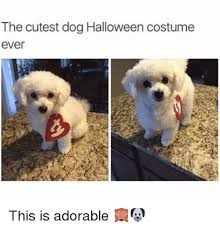 Cutest Memes - the cutest dog halloween costume ever this is adorable