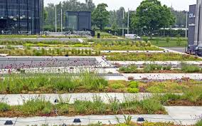 extensive green roof system for flat roofs rockery type plants
