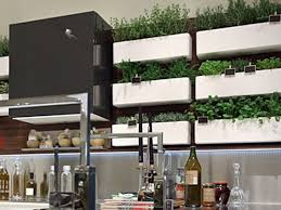 creating an indoor garden for your kitchen yorkville design centre