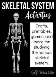 skeletal system worksheets for kids worksheets for kids human