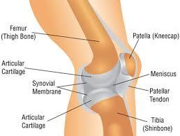 Knee Anatomy Pics Knee Anatomy Ezmend