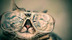 gerüche die katzen nicht mö so reizvoll ist baldrian für katzen praxis und