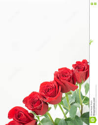 bottom right corner row of roses stock photo image 81631819