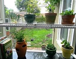 indoors garden how to grow mint indoors aksharspeech com