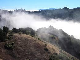 Santa Cruz County Christmas Tree Farms by Santa Cruz Mountains Trails Skyline Ridge Open Space Figure 8 Ramble