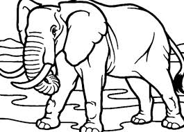 drawing african elephant coloring pages coloring sky
