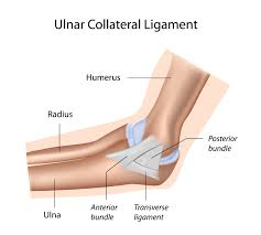 Lateral Collateral Ligament Ankle Prp And Ulnar Collateral Ligament Ucl Prolotherapy Org