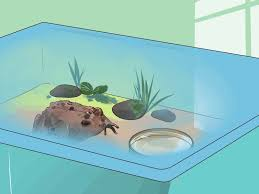 how to care for an american toad 14 steps with pictures