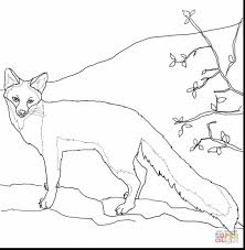 spectacular gray fox coloring page printable with fox coloring