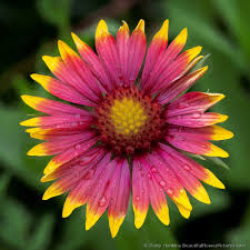 Beautiful Flower Pictures Flowers In The Wild Beautiful Flower Pictures