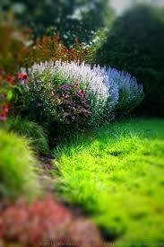 native plant landscaping in new england perennial shade gardens garden maintenance the gardener u0027s eden