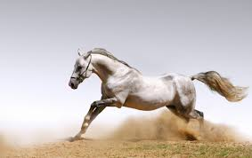 white mustang horse wild white horse wallpapers wild white horse stock photos