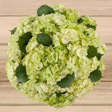 Sage Green 36 Stem Sage Green Hydrangea