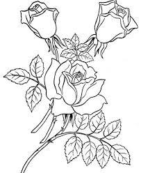imagenes para colorear rosas imágenes de rosas para dibujar flores para colorear