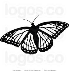 black and white butterflies pictures free best black