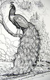112 best coloring pages to print peacocks images on pinterest