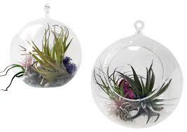 hanging globe terrarium modern terrariums by small things