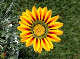 Pictures Of Beautiful Flowers In The World - top 11 most beautiful flowers in the world