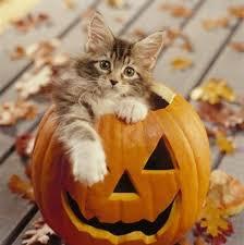 Kitten Halloween Costumes Pet 134 Halloween Cats U0026 Dogs Images Animals
