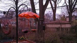 my new bird feeder for orioles u2013 gardeninacity