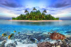 paradise tropical island wall mural beach photo wallpaper sl101748718 marine life 2p