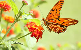 butterfly flowers wallpaper flower butterfly macro desktop animals christmas