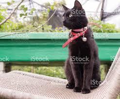 Chair In Garden Black Cat On Wicker Chair In Garden Stock Photo 616224754 Istock