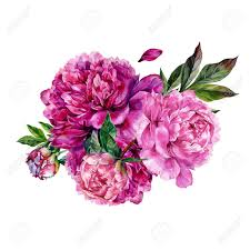 peonies bouquet watercolor peonies bouquet illustration isolated